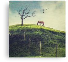 Horse on a Colombian Hillside Canvas Print