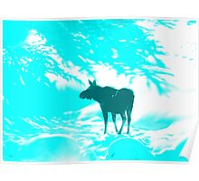 Turquoise Moose on the loose!  Poster