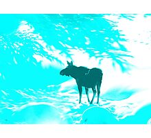 Turquoise Moose on the loose!  Photographic Print