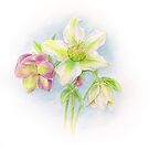 First signs of spring hellebores watercolor by Sarah Trett