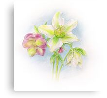 First signs of spring hellebores watercolor Canvas Print