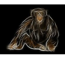 Monkey - Chinese Zodiac by Liane Pinel Photographic Print