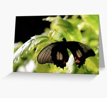 Silver Wings Greeting Card
