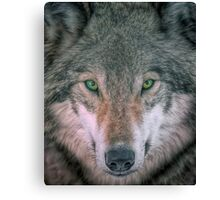 Gray Wolf head shot portrait Canvas Print