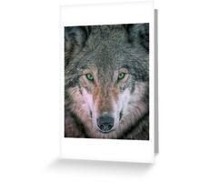 Gray Wolf head shot portrait Greeting Card