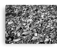 a natural history : monochrome Canvas Print