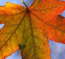 Autumn Leaf Backlit Sticker