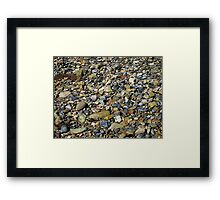 a natural history in colour Framed Print