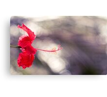 Hibiscus Bokeh Canvas Print