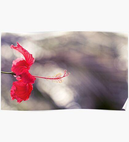 Hibiscus Bokeh Poster