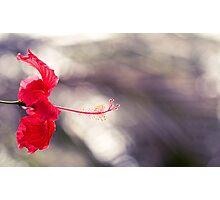 Hibiscus Bokeh Photographic Print