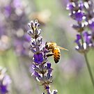 Spring Bee Days by Josie Eldred