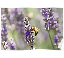 Spring Bee Days Poster