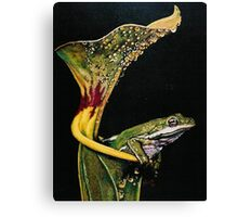 From the Pulpit Canvas Print