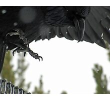 Raven forms the Sky Photographic Print