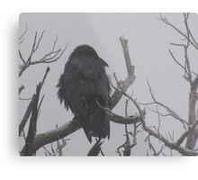 Snowstorm Raven Metal Print