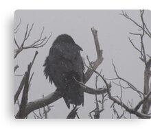 Snowstorm Raven Canvas Print