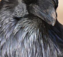 Raven Consideration Sticker