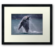 Whales can fly! Framed Print