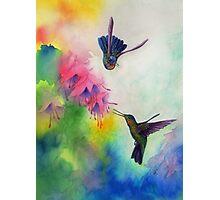 Hummingbirds Dance Photographic Print