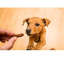 playful brown dog, indoors Photographic Print
