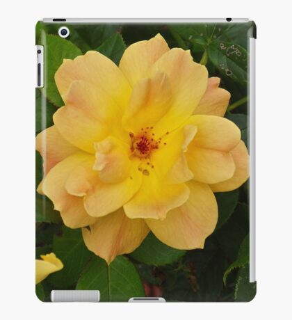 Beautiful Yellow Rose Pentax Digital Camera 16 MPS iPad Case/Skin