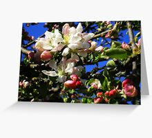 Flower Buds Greeting Card