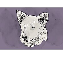 Shepherd. Sketch drawing. Black contour on a purple grunge background. Photographic Print