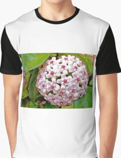 Hoya Carnosa Graphic T-Shirt
