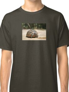 Young Tortoise Emerging From Its Shell Classic T-Shirt