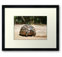 Young Tortoise Emerging From Its Shell Framed Print