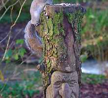 Squirrel on a carved tree stump by Deb Vincent