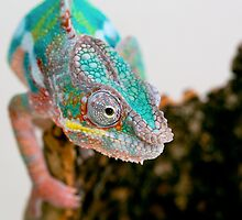 PANTHER CHAMELEON by CRYROLFE