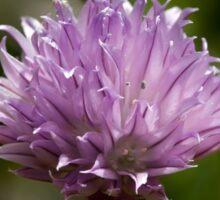 Chives Wild Flower Sticker
