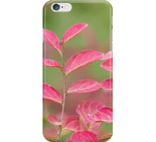 pink flower and leaves  in the garden iPhone Case/Skin