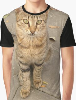 Cute Tabby Street Cat Graphic T-Shirt