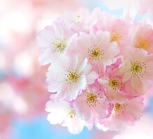 Delicate Spring by Jacky Parker