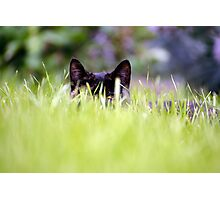 Catch A Cat's Eye Photographic Print
