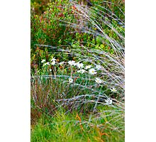 Spring Native Garden Photographic Print