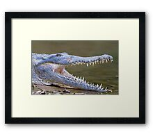 Crocodile Framed Print