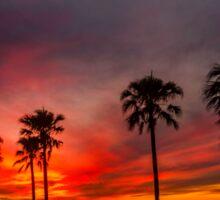 Blazing Sunset - Cleveland Qld Australia Sticker