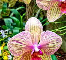 Orchid Garden Sticker