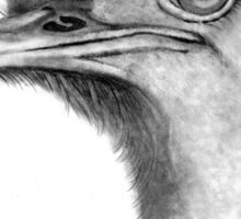 Ostrich Head in Pencil: Big-Eyed Ostrich Drawing Sticker