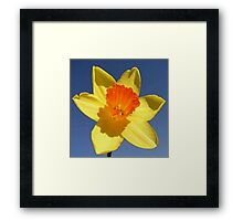 Yellow and Orange Colored Daffodil Close Up Framed Print