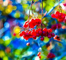 Arrowwood Berries Abstract by luckypixel