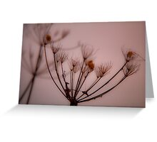 Hogweed - Abstract shapes in winter time Greeting Card