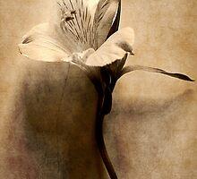 Sweet Memories by Christine Lake