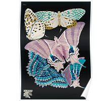 Emile Allain Séguy or Seguy Papillons Butterflies 1925 017 Inverted Poster