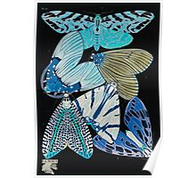 Emile Allain Séguy or Seguy Papillons Butterflies 1925 033 Inverted Poster