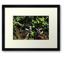 Pair of Spectacled Owls Framed Print